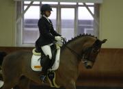 Continental поддерживает конный спорт